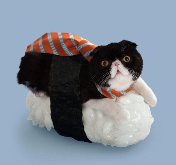 sushi-cats-3