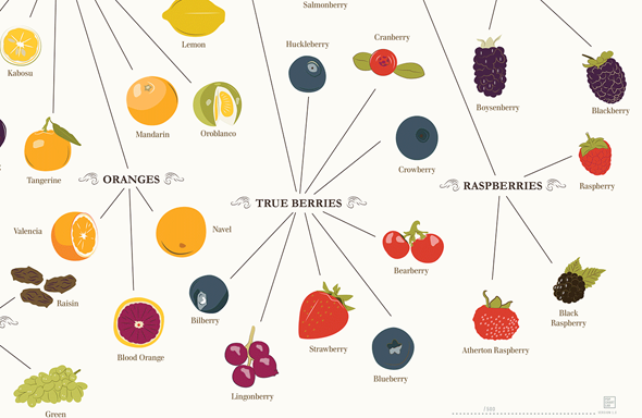 varieties-of-fruits-2