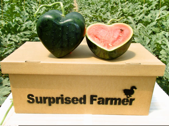 japanese-farmer-creates-the-worlds-first-heart-shaped-watermelon-1
