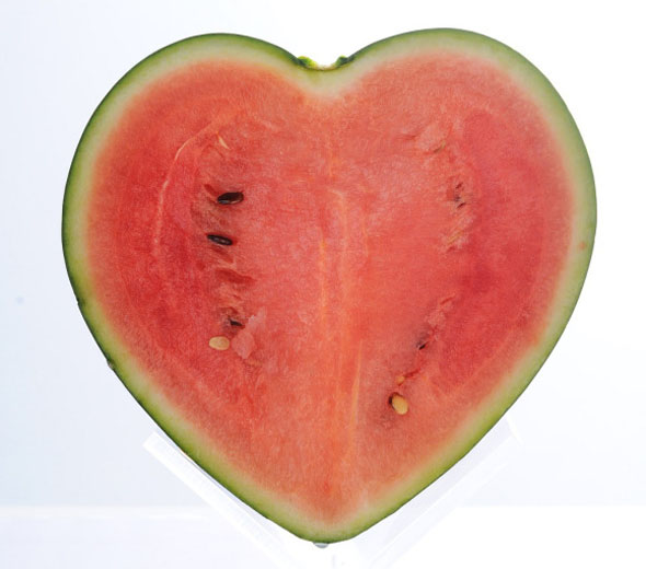 japanese-farmer-creates-the-worlds-first-heart-shaped-watermelon