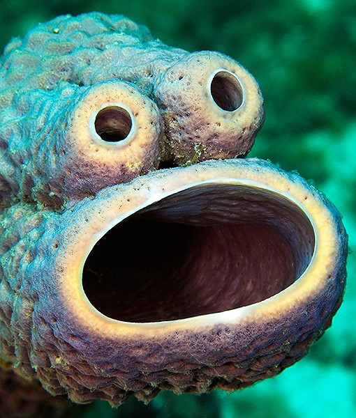 cookie-monster-sea-sponge