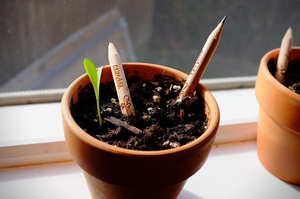 Sprout-Pencils-Plant-Your-Pencil-5