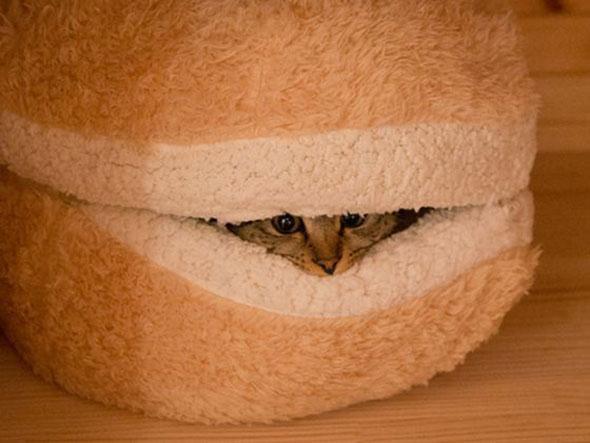 catburger-4