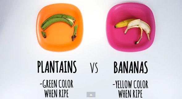 food-differences