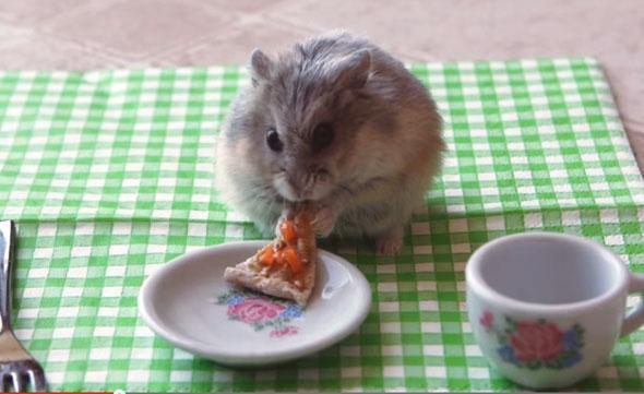 pizza-hamster