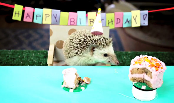 hedgehog-birthday