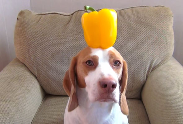 dog-balancing