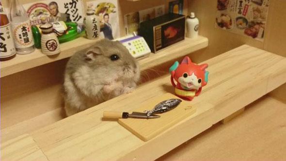 hamster-bartender-2