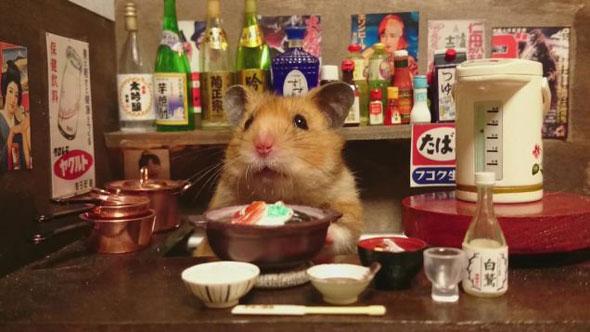 hamster-bartender-5