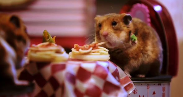 hamsters-spaghetti