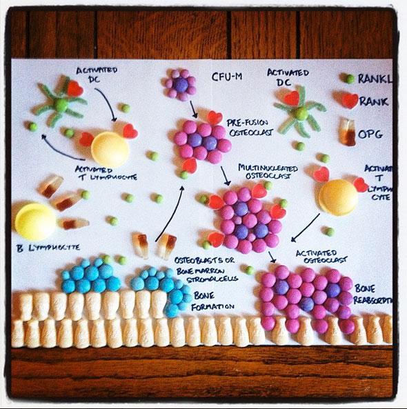 candy-anatomy-6