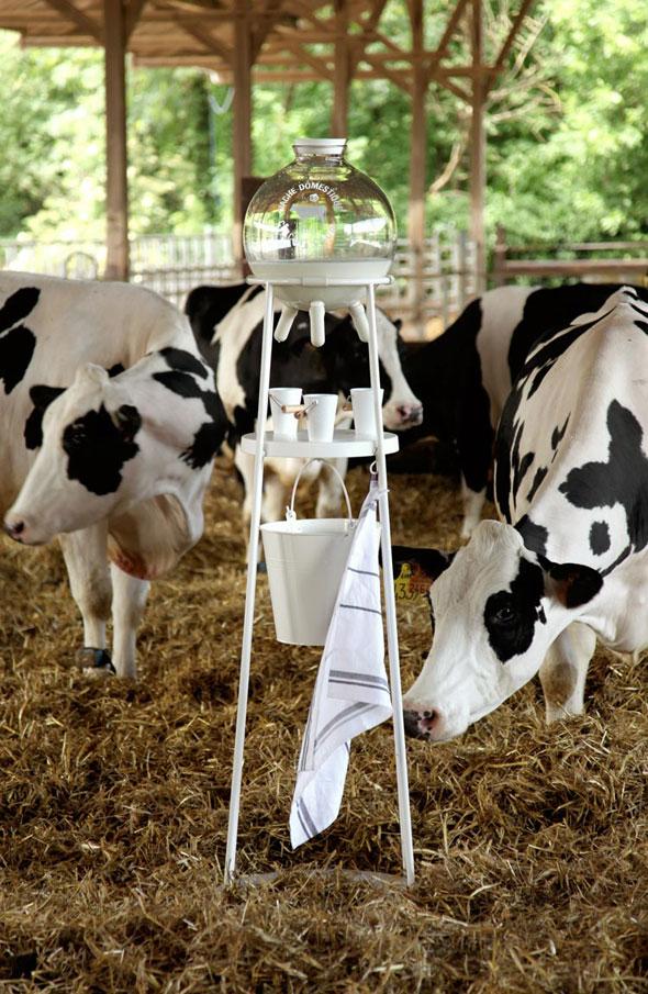 milk-cow-3