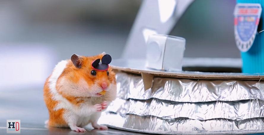 tiny-hamster-disney