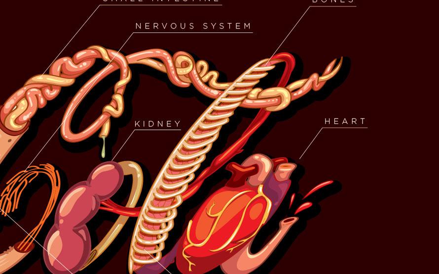 coke-logo-organs-3