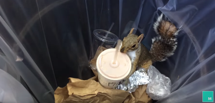 milkshake-squirrel-2