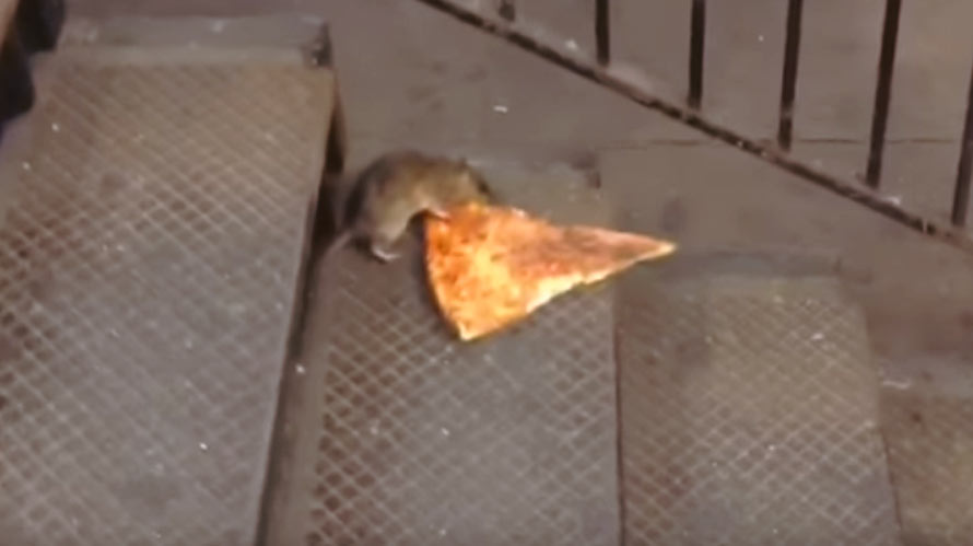 pizza-rat