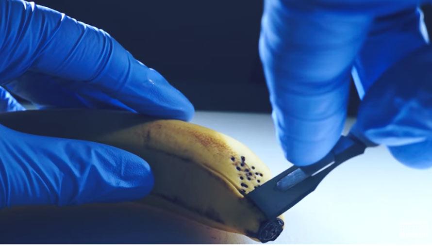 banana-autopsy