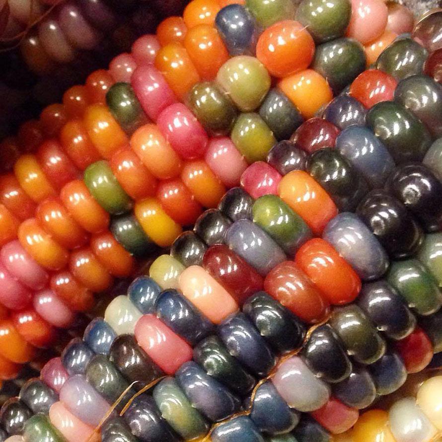 rainbow-corn-3
